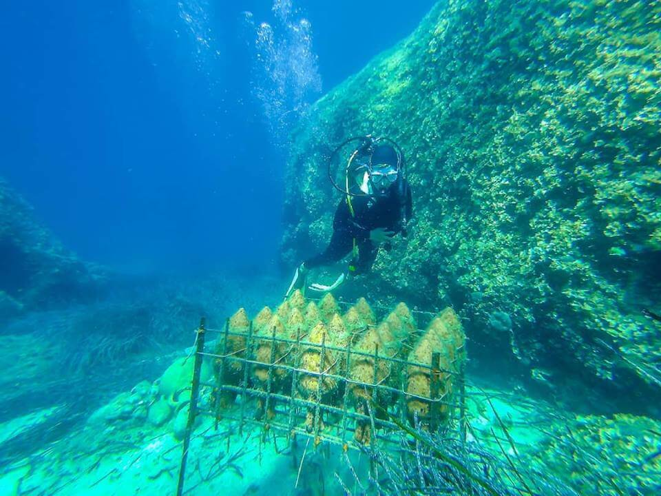 What to do on Peljesac, combine love of wine with scuba diving